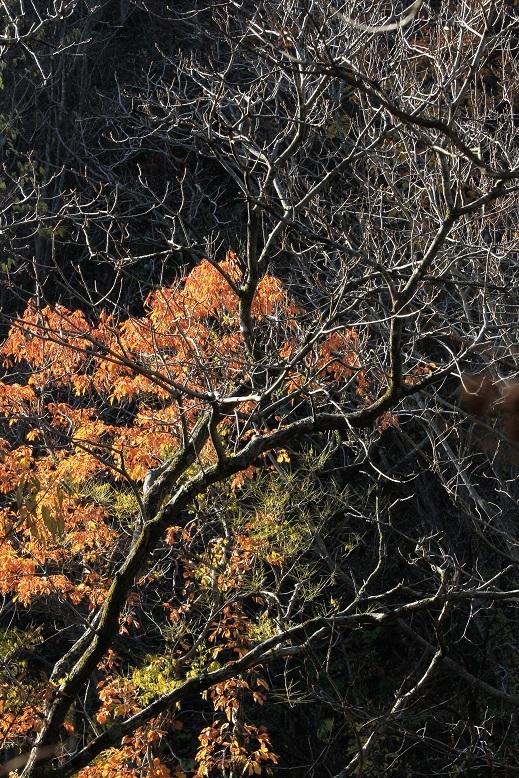 落葉した木と紅葉