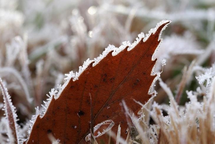 コナラ落ち葉霜