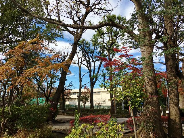 暖かく晴れ渡る12月の東京2 by占いとか魔術とか所蔵画像
