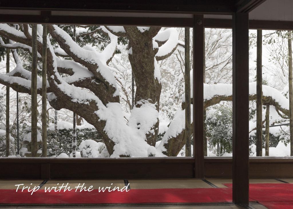雪の五葉松