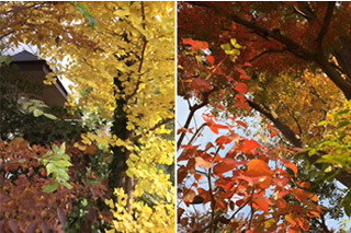 leaf320.jpg