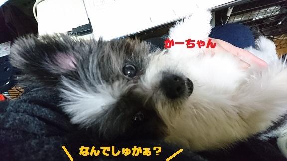 DSC_1299_201612202333384f9.jpg