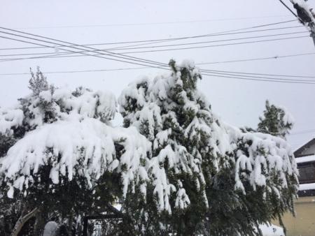 2017-01-15_04.jpg
