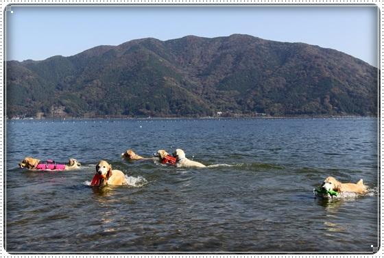 2016,11,13琵琶湖9