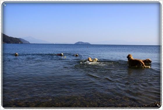 2016,11,13琵琶湖22