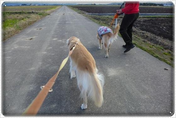 2016,11,27お散歩2