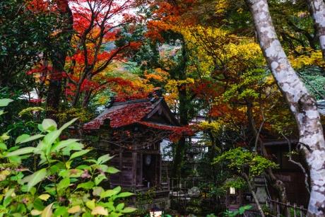 yunoyama_4_2016111722123470c.jpg