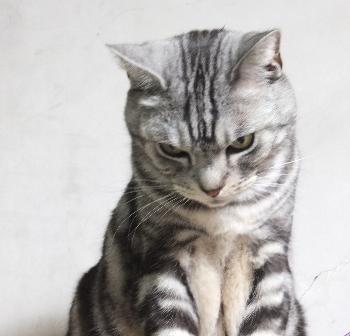 珍しく猫だな2