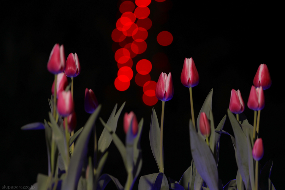 flowerPillumi2-1.jpg