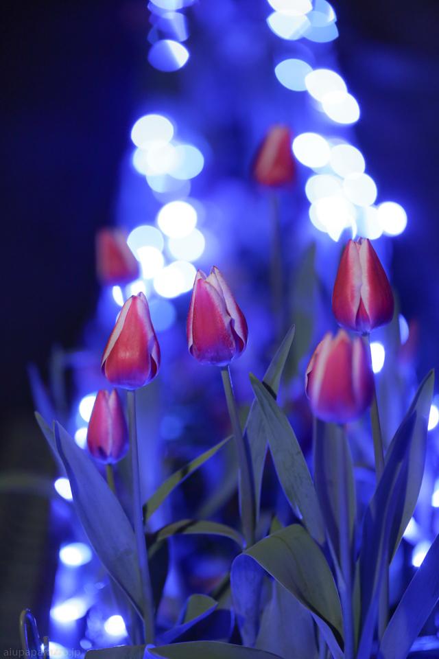 flowerPillumi2-11.jpg