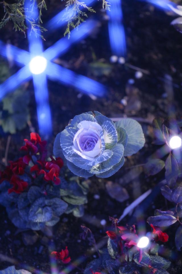 flowerPillumi2-13.jpg