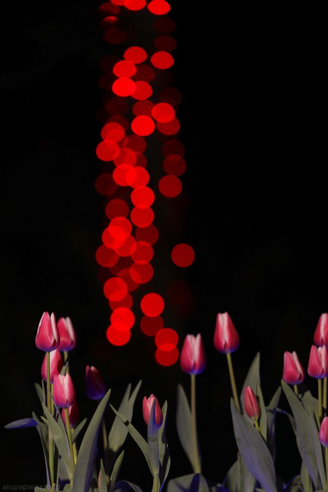 flowerPillumi2-3.jpg