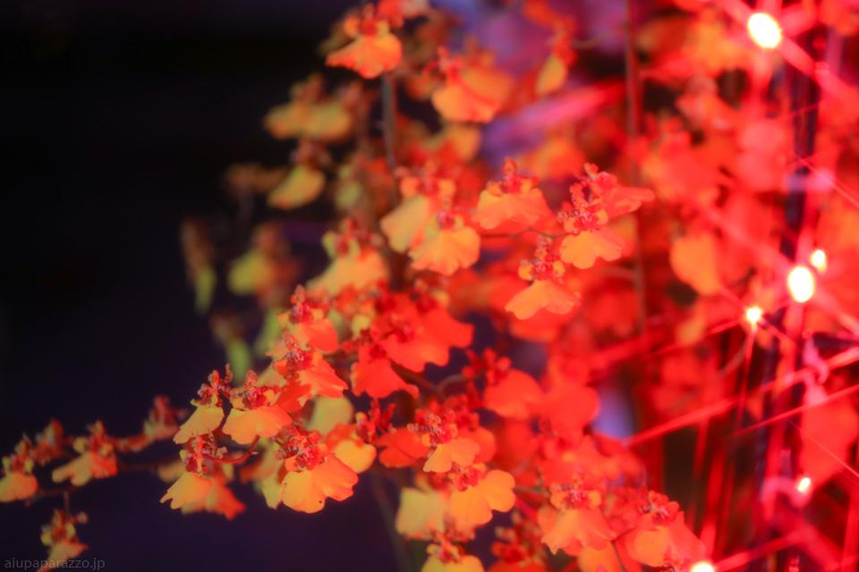 flowerPillumi2-6.jpg