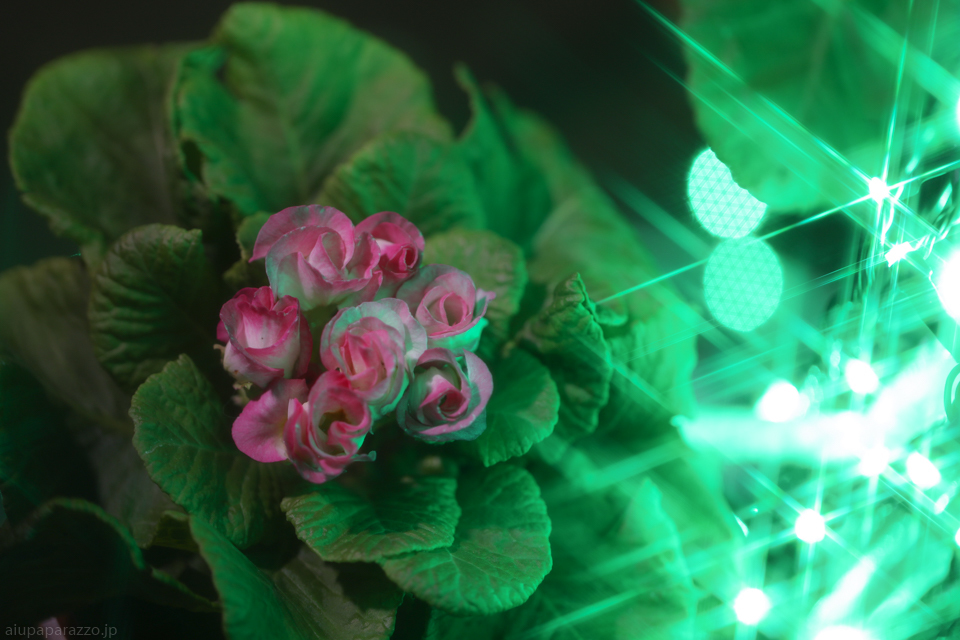 flowerPillumi2-7.jpg