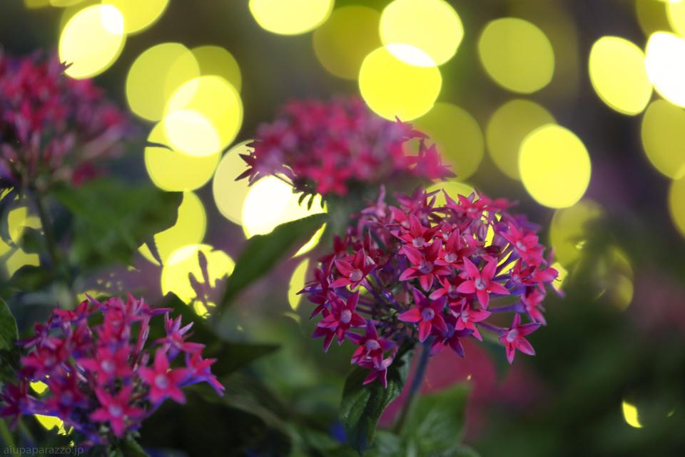 flowerPillumi2-9.jpg
