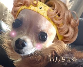 りゅうちぇる犬