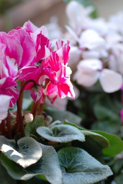2016大晦日の庭 ⑤
