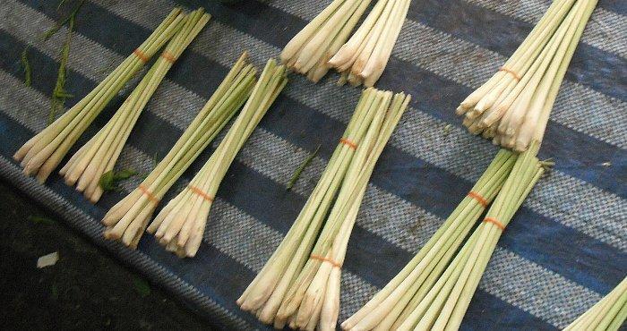 lemongrass taba ga narabu