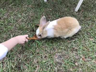 兔子餐廳_161215_0016