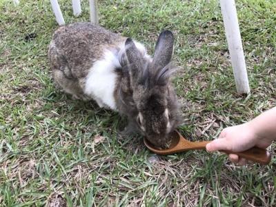 兔子餐廳_161215_0017