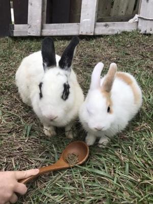 兔子餐廳_161215_0046