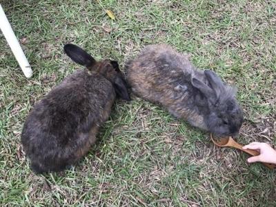 兔子餐廳_161215_0054