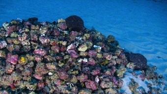 「アマゾン礁」