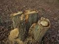 伐採された木々