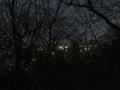 林間からの夜景