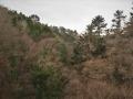 樅と杉の森