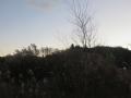 草原の日没