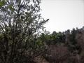 ビワのある山