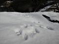 リスの足跡