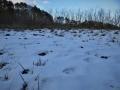 雪の残る原