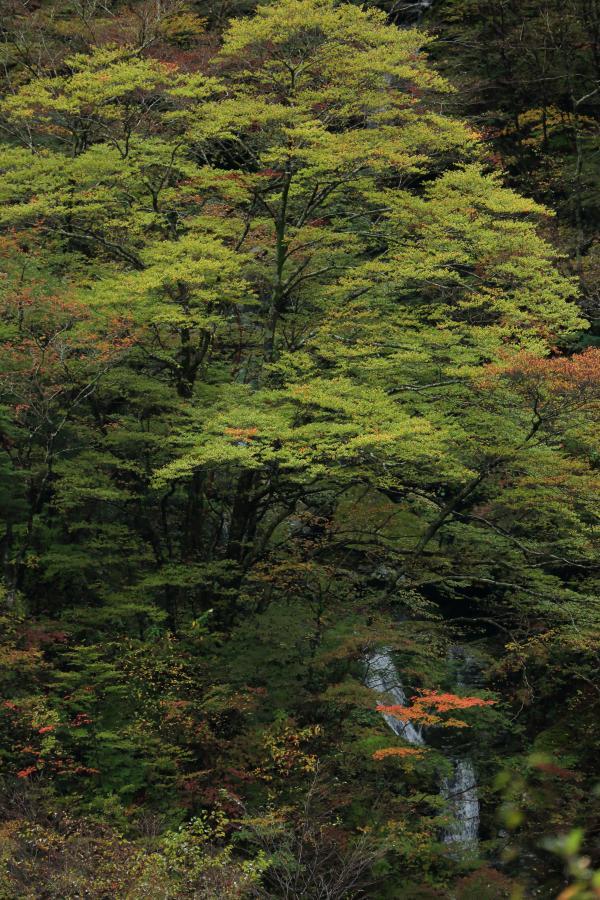 小さな滝の秋
