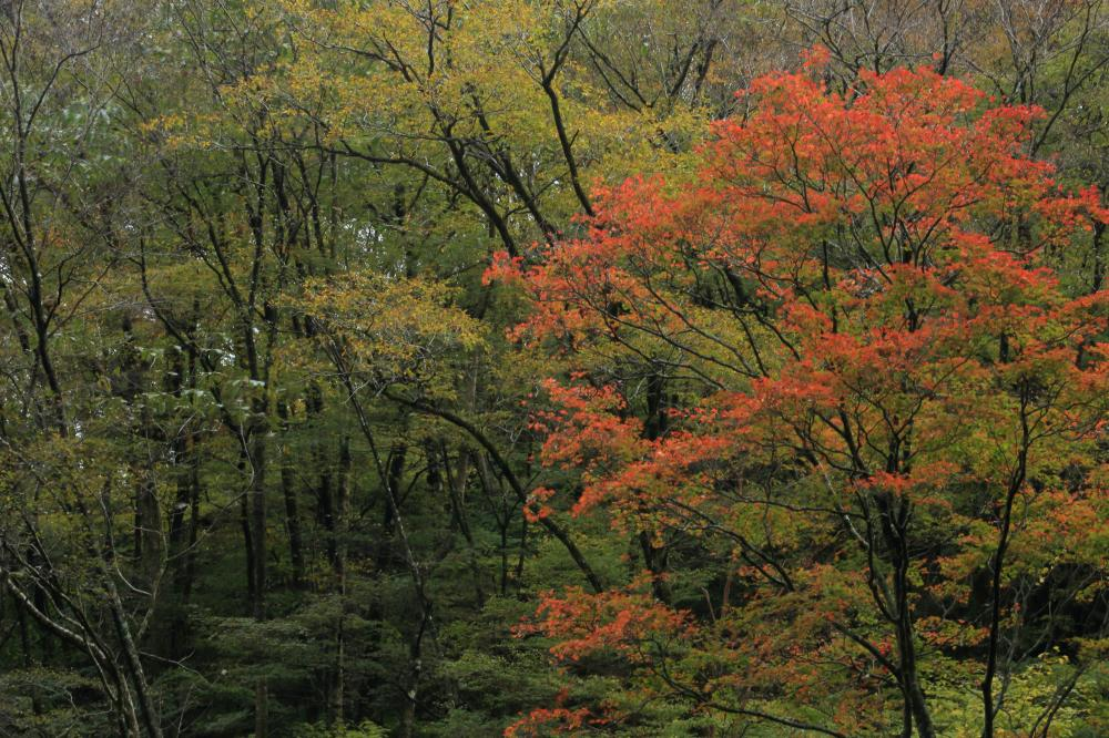 紅と黄の森