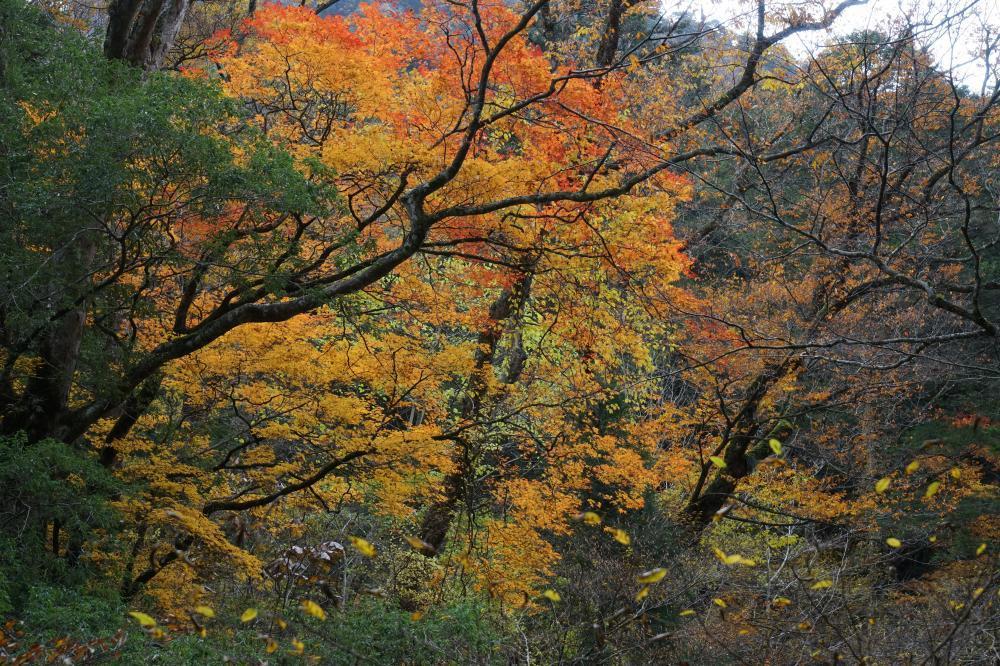 秋の メロディ
