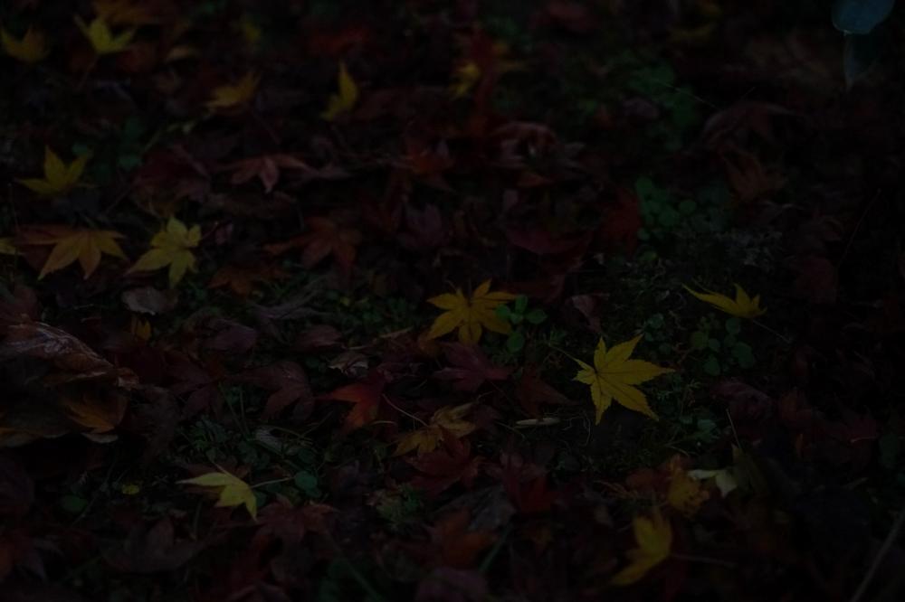 夕暮れの彩
