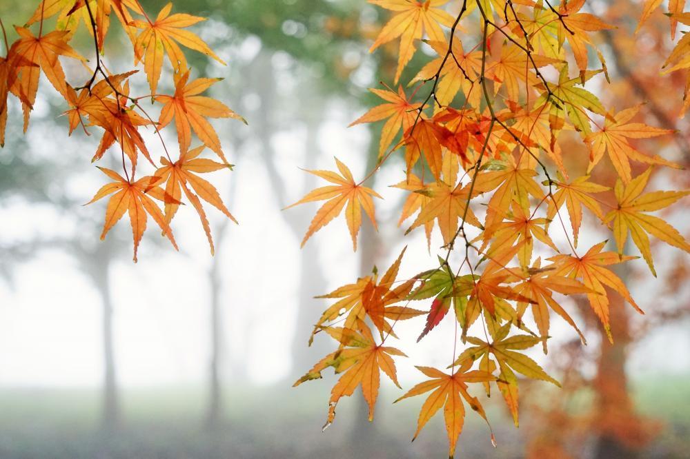 雨降りの森