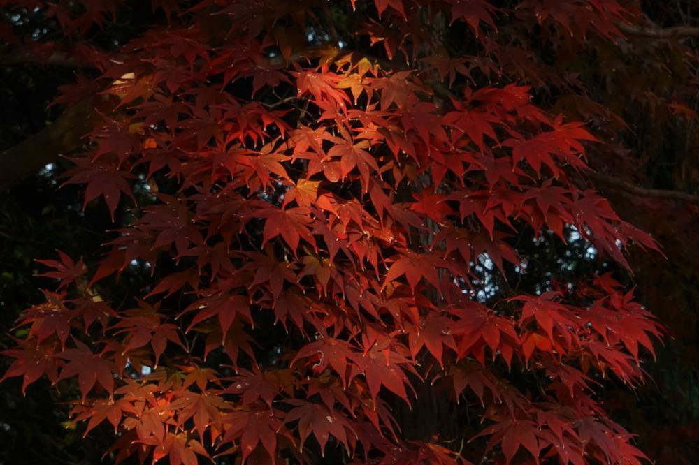 光のある樹