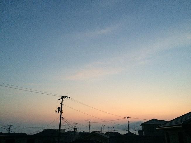 IMG_7981.jpg