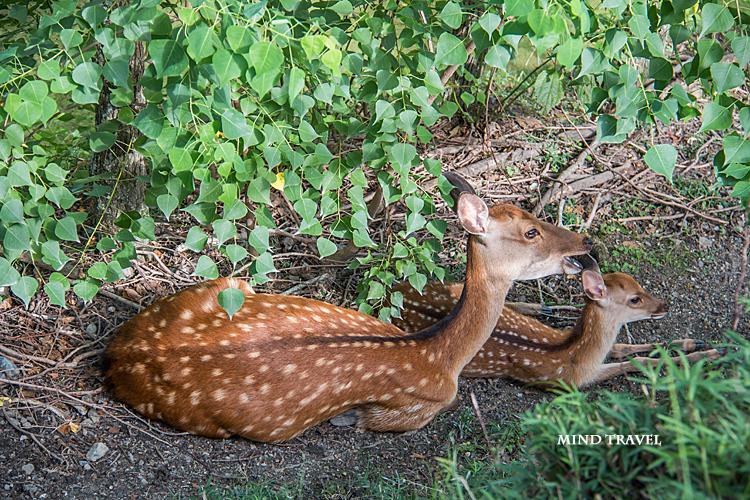 奈良の鹿 親子