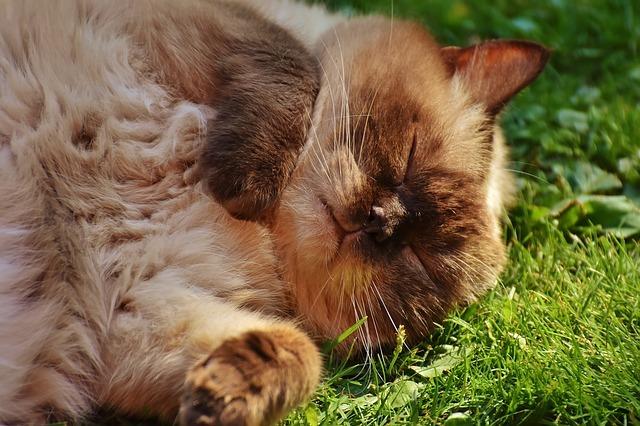 cat-1632303_640.jpg