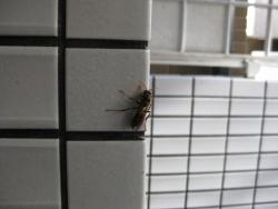 12月にハチ 1
