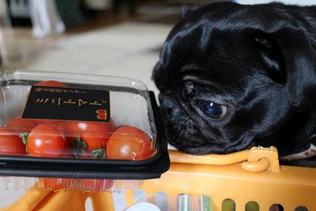 トマトにぎょ