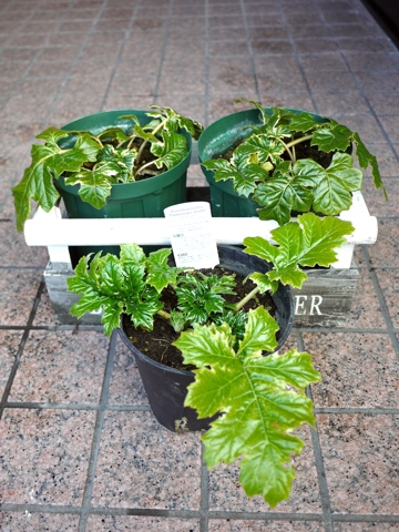 gardening281
