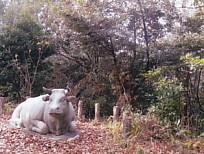 牛山の牛1