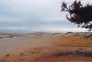 中田島砂丘の砂丘