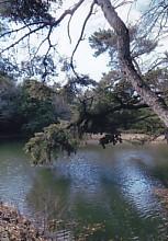 四つ池公園4