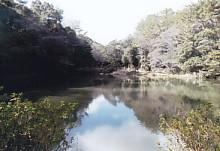 四つ池公園2